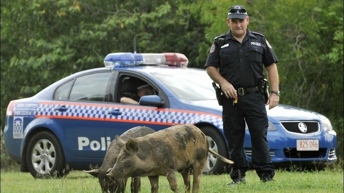 Fugitive Pigs, Shitting Echidnas and a Sandwich Fight