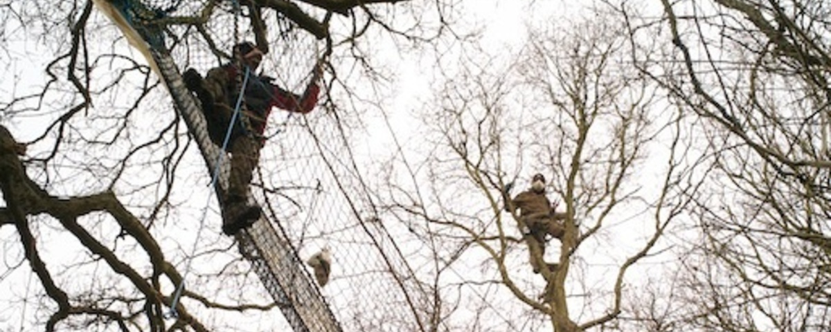 The Hastings Anti-Motorway Warriors Are Still Up in Their Trees