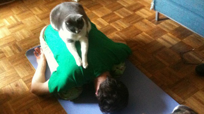 Kattenyoga met experts