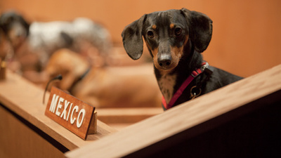 The Dachshund United Nations