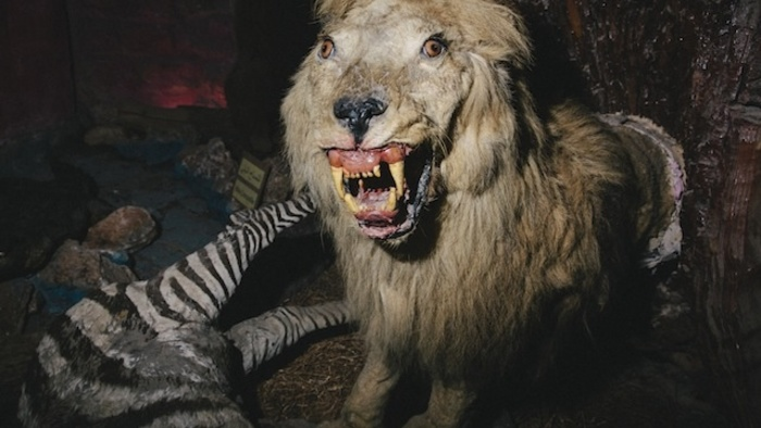 This Palestinian Taxidermist's Stuffed Animal Zoo Is Kind of Heartbreaking