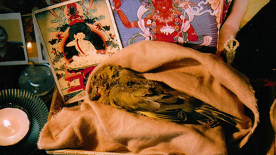 A Tale of Two Birds and Tantric Meditation
