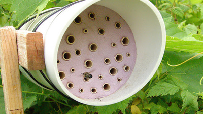 Bees Are Building Nests with Our Waste Plastic