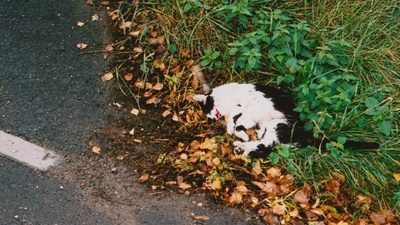 The Case for Culling the UK's Cats
