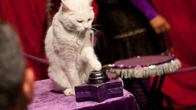The Cat Circus Proves Humans Are Obsessed With Watching Cats Do Dumb Shit