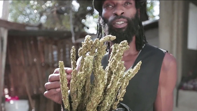 Jamaican Bud Business