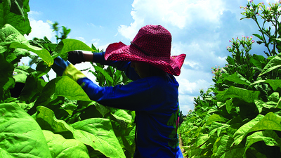 Is the Government Going to Do Anything About Dangerous Child Labor on Southern Tobacco Farms?