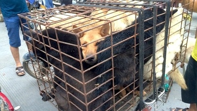 Activists Couldn't Stop 10,000 Dogs from Being Eaten Last Weekend in China