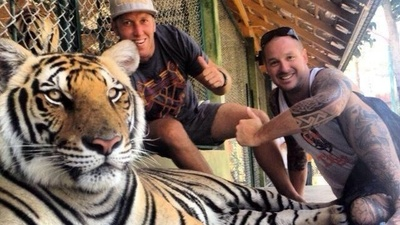I Talked to the New York State Legislator Who Wants to Ban Tiger Selfies