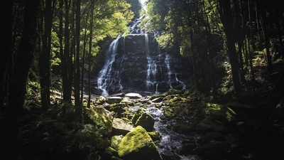 Will a Slap On the Wrist Save Tasmania's Heritage Forests?