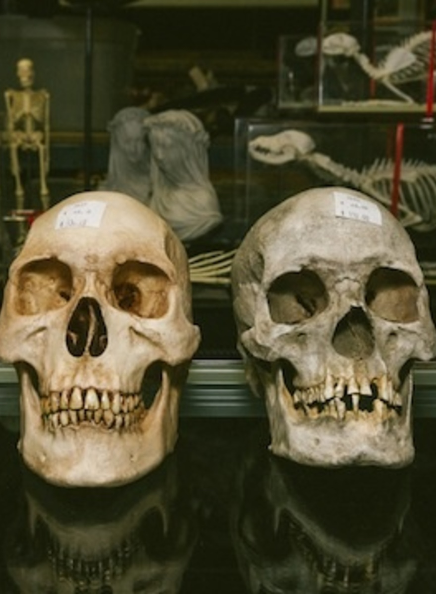 A Visit to the Little Shop Where Hollywood Buys Its Dead Bodies