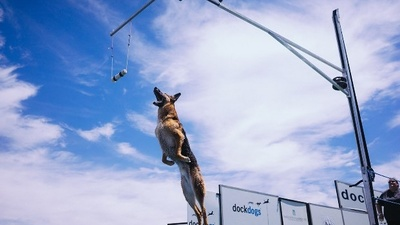 We Went to the World's Premier Canine Aquatics Competition