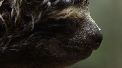 Bio-Prospecting with Panama's Tree Sloths