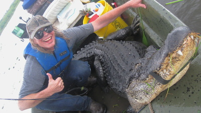 Killing a Ten-Foot Alligator in the Swamps of Louisiana