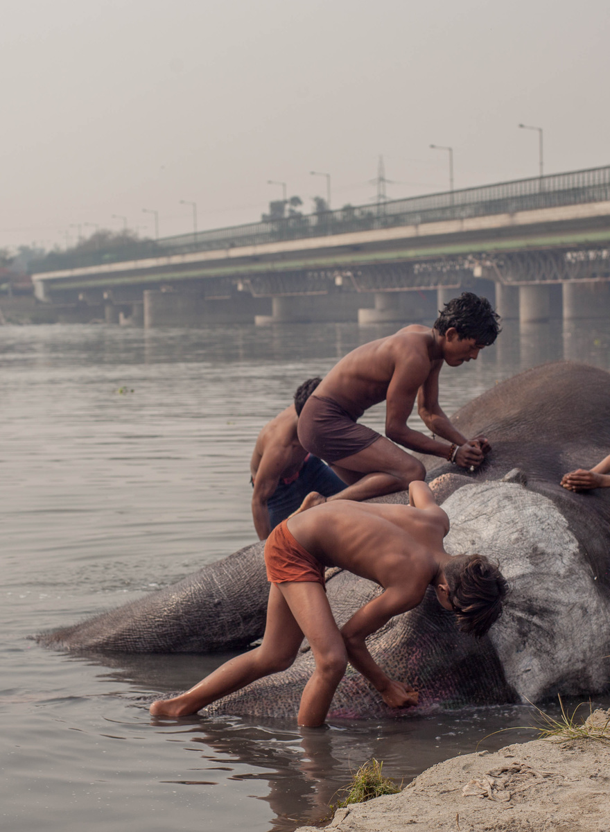 Photographing Delhi's Inner City Elephants