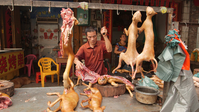 Dog Days of Yulin