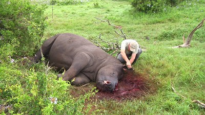 Meet the Radical Veterinarians Who Want to Dehorn Rhinos Before Poachers Can