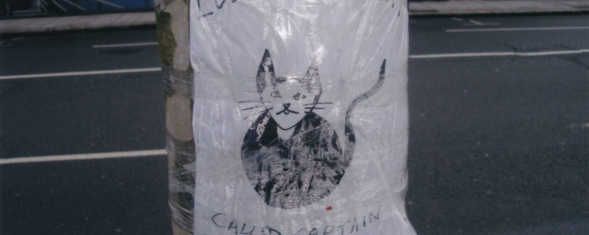 I Spent Ten Years Taking Photos of Lost Cat Notices