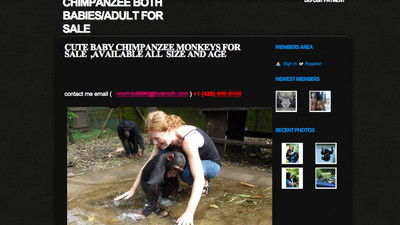 The Shady World of People Who Offer to Illegally Sell Chimps Online