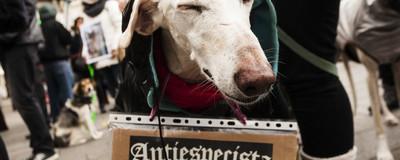 Animales muertos para denunciar el maltrato contra ellos