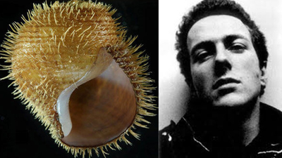Science Names a Snail After the Clash's Joe Strummer