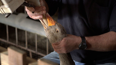 The Politics of Food: Foie Gras