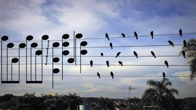 This Guy Turned a Photo of Birds Perched on a Wire Into Sheet Music