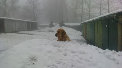 ​What Happens to Stray Animals in a Blizzard?