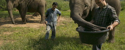 Meet the Canadian Trying to Make Elephant Poo Coffee a Thing