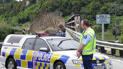 News of Zealand: Animals and Jewellers do the darnedest things