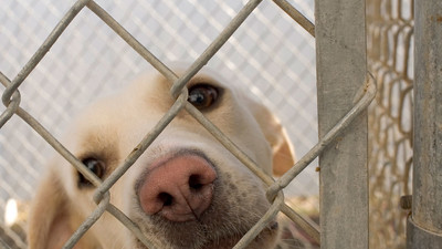 A Look at the Lost Dogs Home Accused of Killing Dogs for Cash