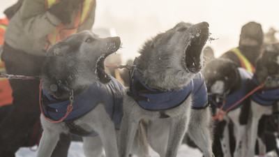 Mush 'Em All: Tracking the Toughest Dog Sled Race in the World