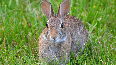 A DEA Agent Tried to Stop Medical Weed from Coming to Utah By Saying Bunnies Will Get Stoned