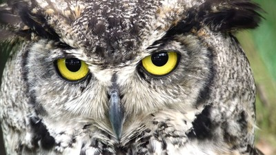 The Guy Behind London's Owl Bar Says You Misunderstood the Whole Thing