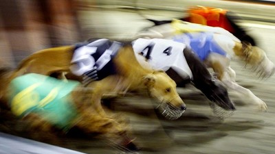 Queensland's Mass Greyhound Grave Is Only the Beginning