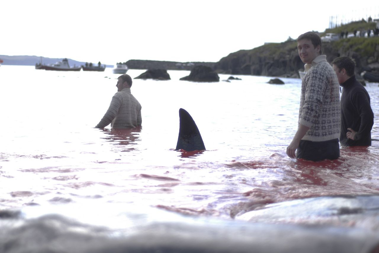 "Tróndur Dalsgard, <a href=""http://www.vice.com/en_uk/read/Faroe-Islanders-Love-To-Stab-Whales-To-Death"" target=""blank"">Faroe Islanders Love To Stab Whales To Death</a>"