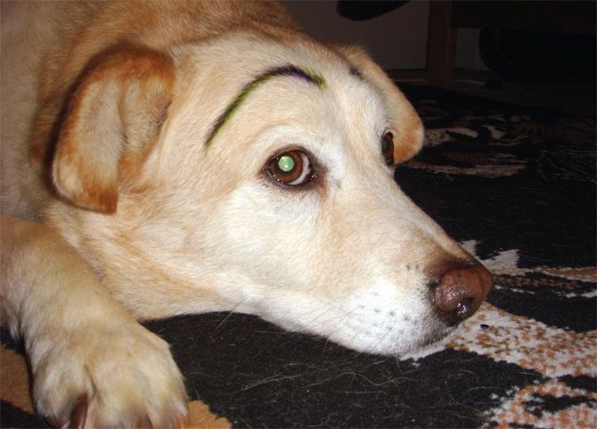 "Ellis Jones, <a href=""http://www.vice.com/en_uk/read/the-cute-show-page-743-v18n3"" target=""blank"">Dogs With Eyebrows</a>"