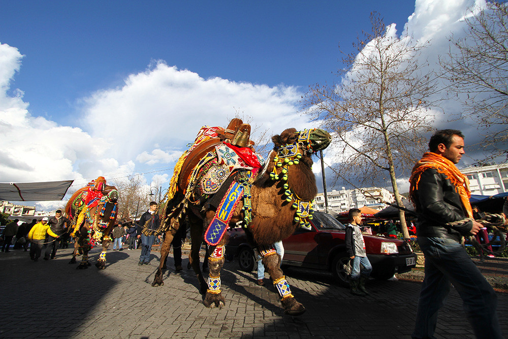 Heavily decorated camels strut through the streets of Selçuk. The most beautiful camel wins a golden bell.