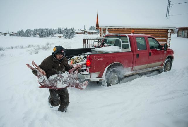 A helper of Modeste Eddibar hauls the carcass of wolves to a storage unit. Meat from animals are tested by the GNWT to see how healthy poplualtions are. It also goes to feed dog teams.