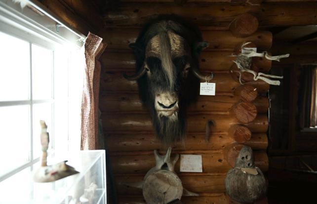 Bern Will Brown's museum features Northern treasures like Inuit carvings, art, journals and taxidermy of wild animals from across the NWT and Nunauvt.